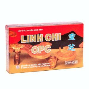 Lingzhi mushroom from Vietnam