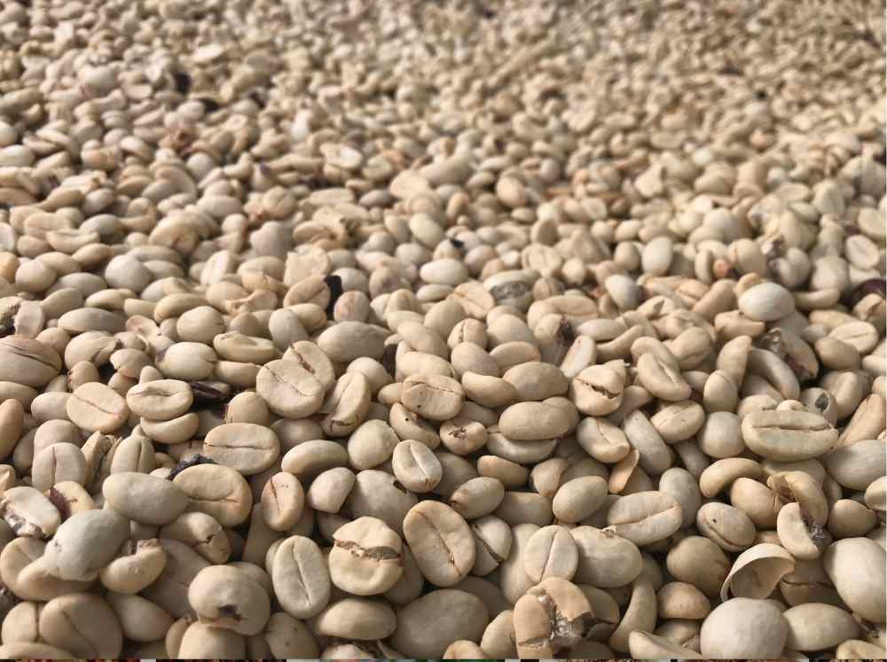 Coffee Processing Methods - Fully Wash processing drying coffee