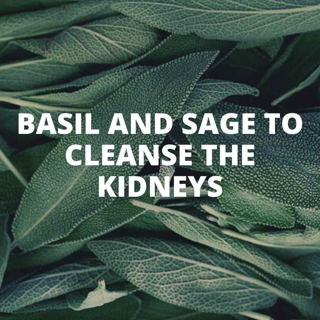 Basil and Sage to cleanse the kidneys information article