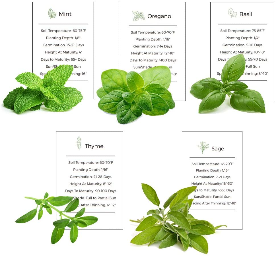 Sage basil and other