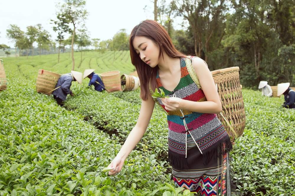 best Types of tea in Vietnam