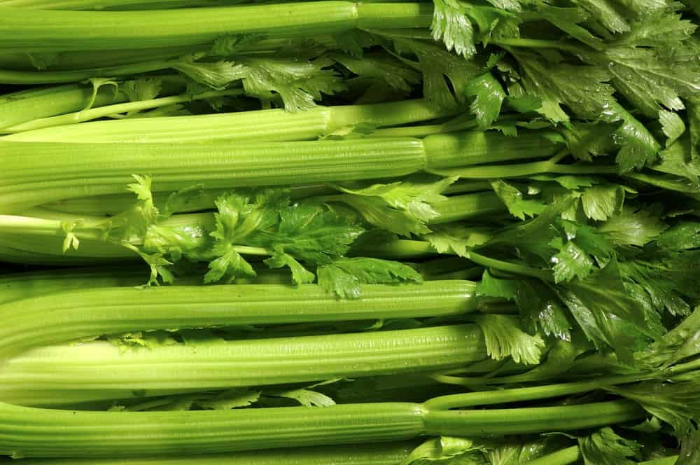 Information about celery