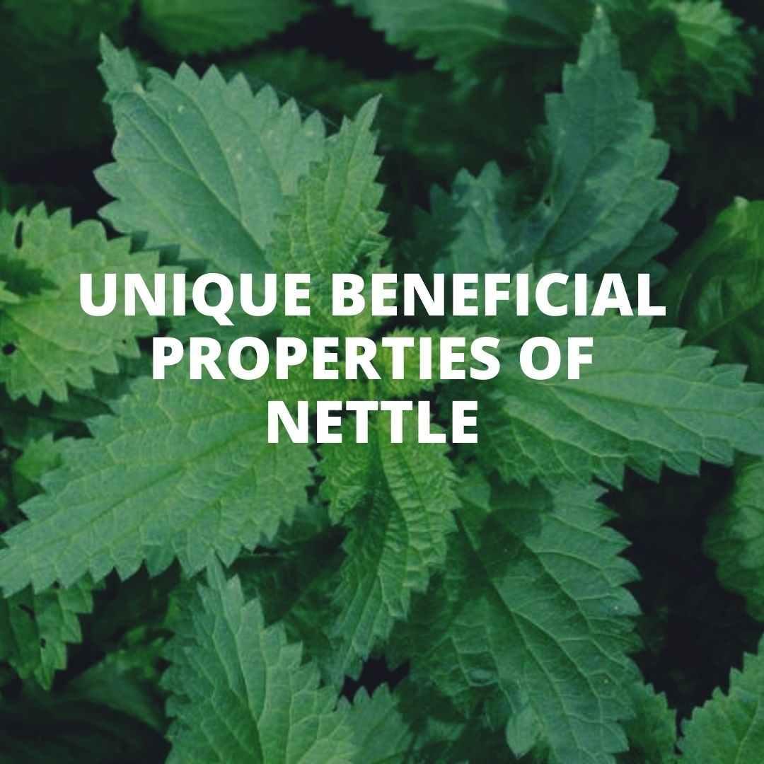 Best Unique beneficial properties of nettle