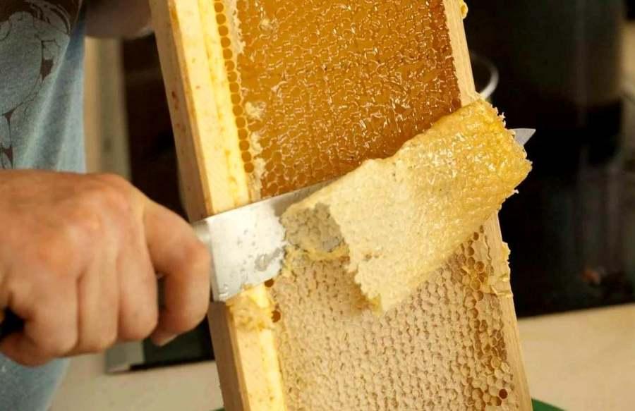 Bee wax Zabrus