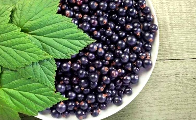 Currant berry