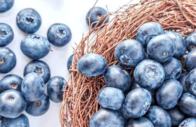 blueberry best summer berries