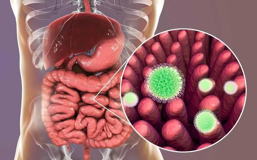 rotavirus photo