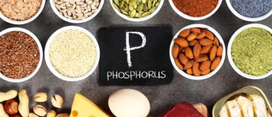 Foods High in Phosphorus for bones