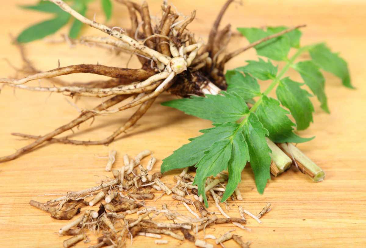 properties of valerian root