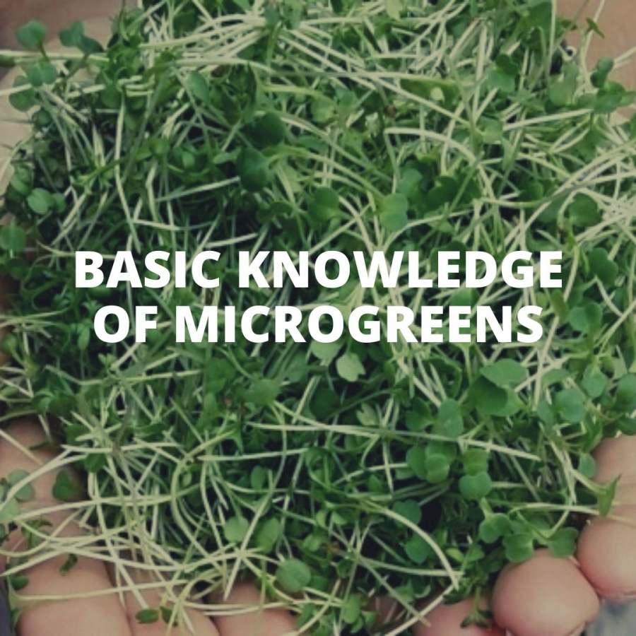 Basic knowledge of microgreens